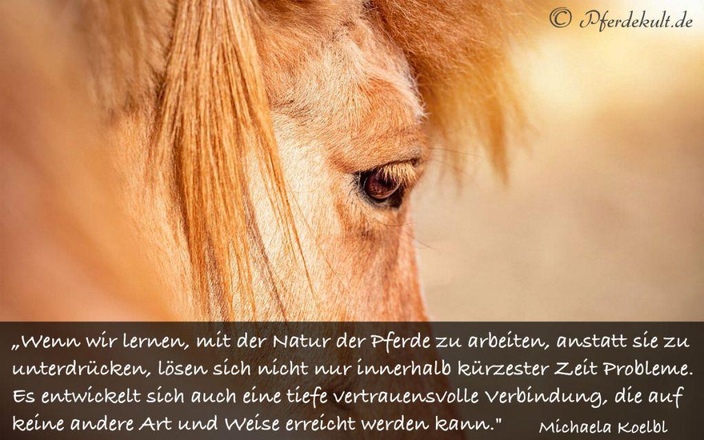 Sprüche über pferde status Pferdesprüche für